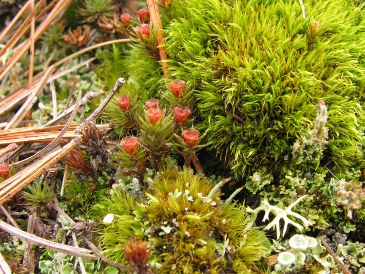 moss-flower-1.jpg