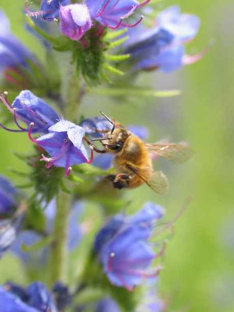 honey-bee-small.jpg