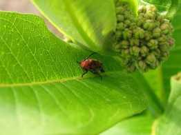 milkbug-blog.jpg