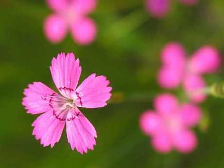 pinks-small.jpg