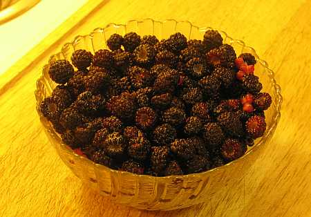 black-raspberries-small.jpg
