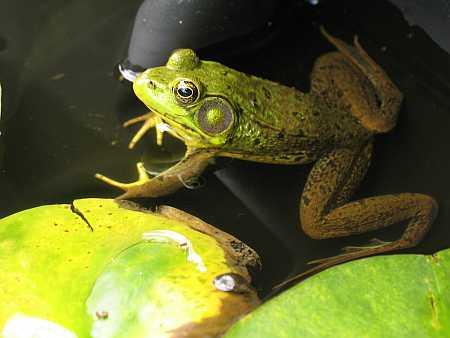 frog-small.jpg
