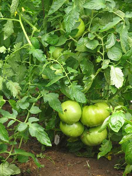 maters-small.jpg