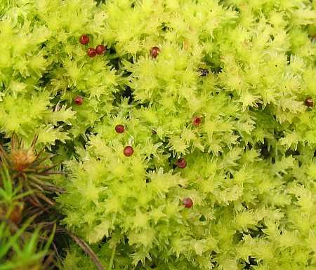 moss-berries-small.jpg