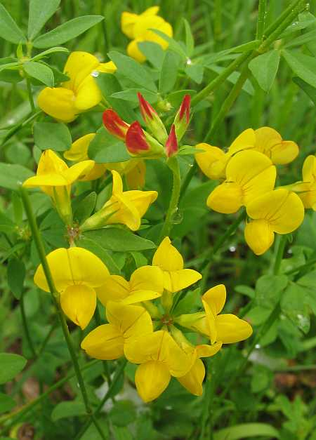 yellowflowers-small.jpg