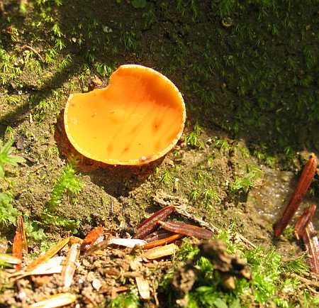 orange-peel-small.jpg