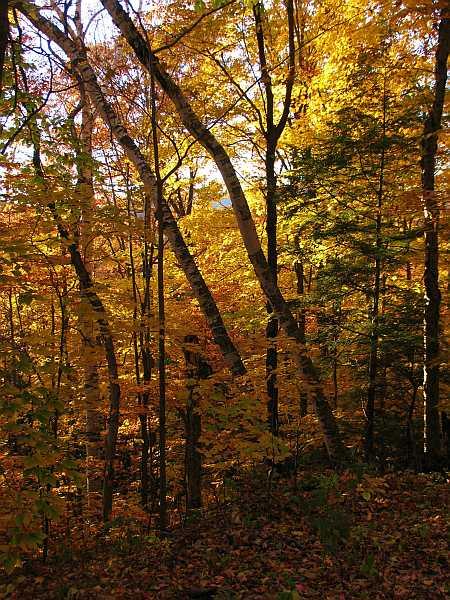 autumn-light-small.jpg