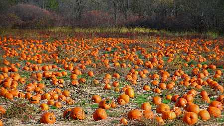 pumpkins-small.jpg