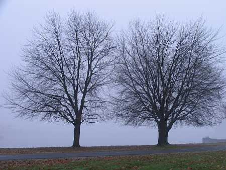 bartons-trees.jpg