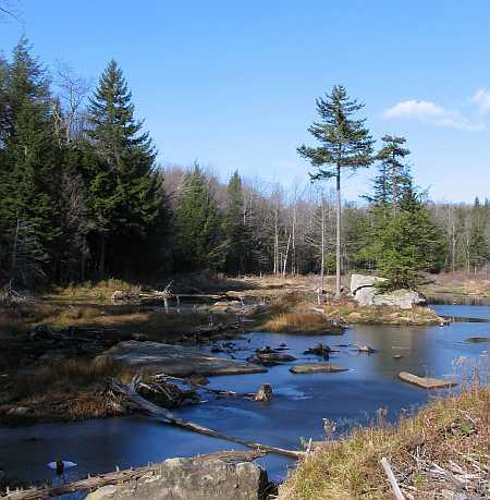 pond-small.jpg