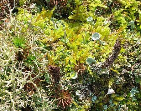 potpouri-crop-small.jpg