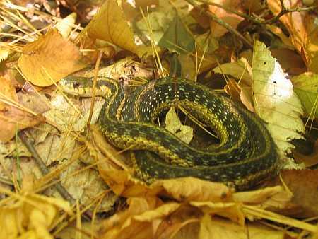 snake-small.jpg