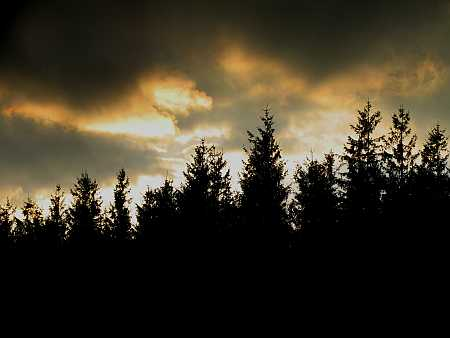 fir-sunset-small.jpg