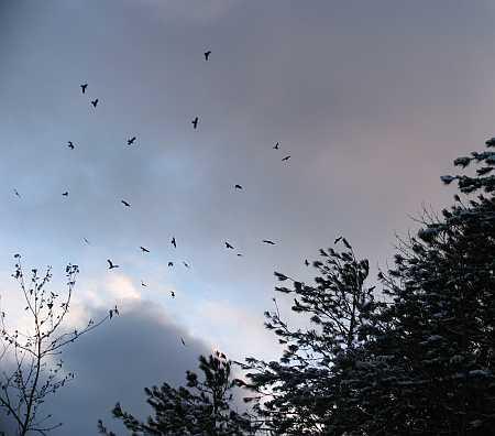 murder-of-crows.jpg