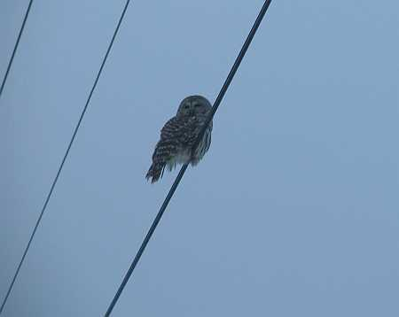 owl-2-small.jpg
