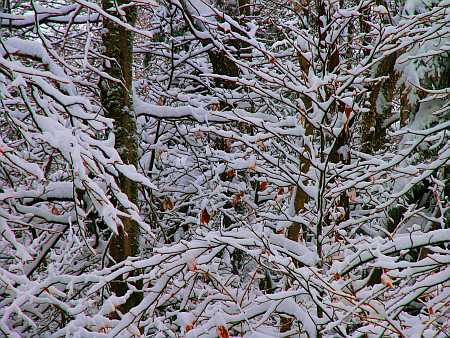 branches-small.jpg