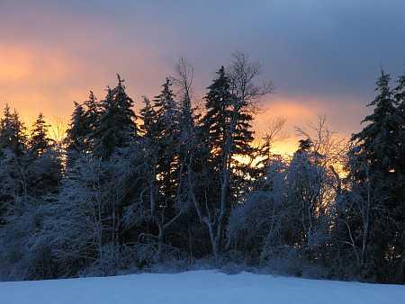fir-sunset-small.jpg