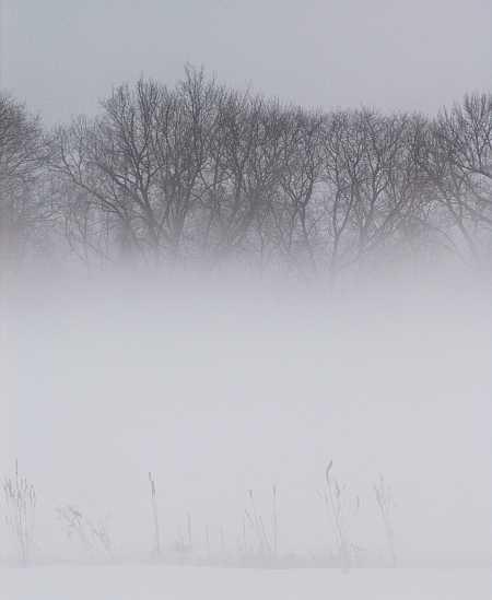 fog1-small.jpg