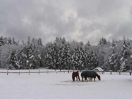 horses-small.jpg