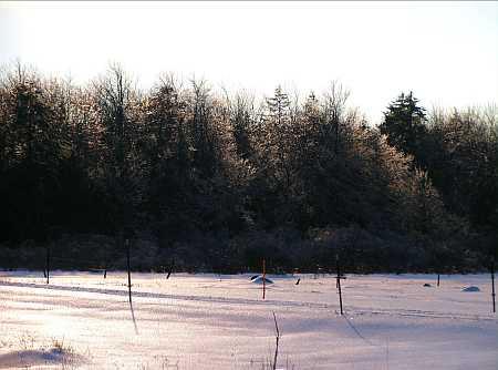 ice-storm1-small.jpg