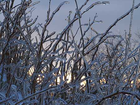 ice-storm5-small.jpg