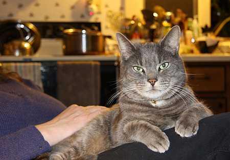 mr-cat-small.jpg