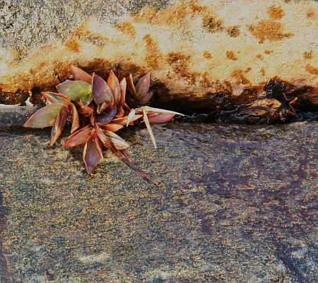 succulent4-small.jpg