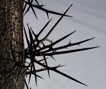 thorns-small.jpg
