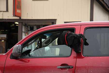 driving-dog-small