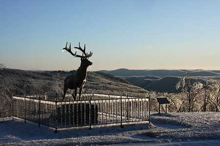 elk-in-ice-small