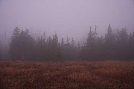 fir-fog-small