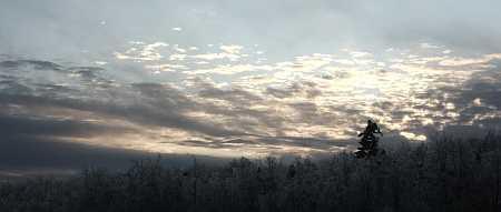 spruce-sky-small