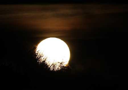 deciduous-full-moon