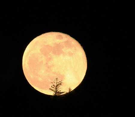 ruddy little moon