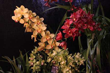 Amherst orchid show