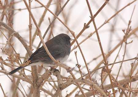 little bird in bush