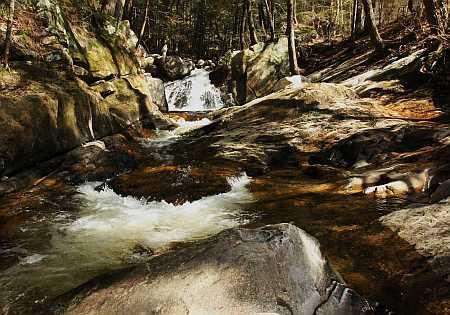 cheshire stream