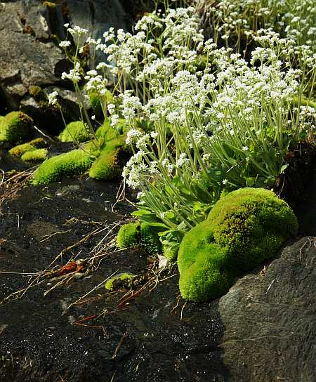whites and moss