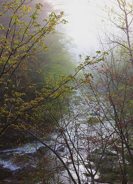 foggy Cold river