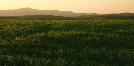 greylock grass