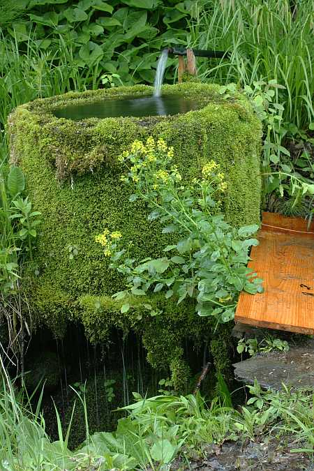 Heath spring