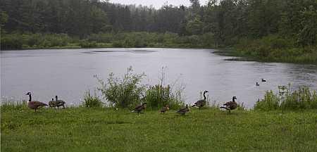 duck duck geese