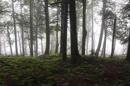 Raycroft forest
