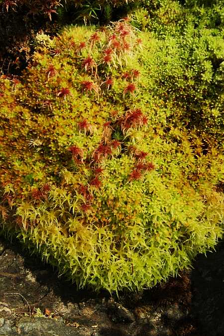 moss with rubys